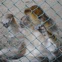 Können Affen Personenrechte haben?
