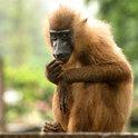 Der Affe ist nicht das einzige Tier, das zählen und rechnen kann