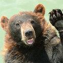 Die Grenzen zwischen ihr und dem Bären verschwimmen.