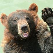 Schon bald ist Kocero ein richtig großer Bär und auf sich allein gestellt