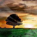 """Nachdem die Leiche des Juden Aaron unter einer großen Buche gefunden wird, wird der Baum nur noch """"Die Judenbuche"""" genannt"""