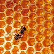 Die Ur-Biene wird von der Modernen verdrängt.