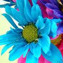 So viele schöne bunte Farben...