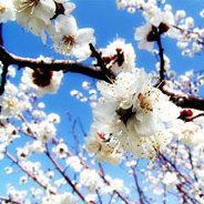 Im Frühling erwacht die Natur zum leben. Auch die Tiere werden gesprächiger!