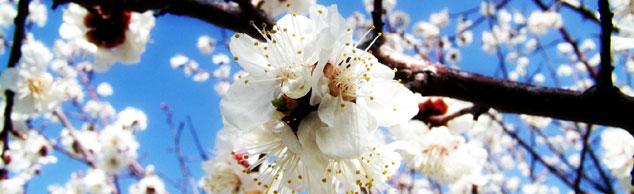 Frühlingsbeginn bei phonostar
