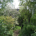 Der blanke Horror für direkte Nachbarn: Ein wild gewachsener Garten