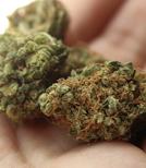 Cannabis gibt es mittlerweile in sehr vielen verschiedenen Formen