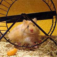 """Ein Leben nackt und bloß unter der Erde - andere nennen das """"Hamsterrad"""""""