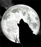 Auf dem Gelände soll sich ein Wolf herumtreiben.