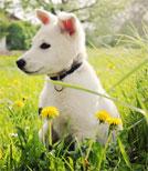 """In """"Die Welpen"""" wird eine grausame Realität aus dem Blick von Hundewelpen erzählt"""