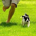 Nicht jeder Besitzer kann dem Haustier genug Zeit widmen