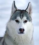 Von einem singenden Hund erfährt Anna vom Winterzirkus