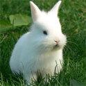 Immer wieder sucht Roberts dementer Vater das Weite, um seine schon längst verstorbenen Kaninchen wiederzufinden. Und Robert weiß langsam nicht mehr, was er in dem ganzen Familien-Chaos noch anstellen soll.