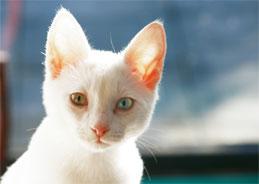 Ganz furchtlos saß die kleine Katze auf der Straße, als das Postauto angebraust kommt