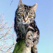 """Eine Katze, die denkt sie sei ein Hund - sowas gibt es beim """"Kakadu"""""""