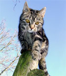 In dieser Geschichte freundet sich eine Katze mit einer Maus an