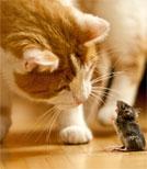Die Katze Sfar kann erstaunlicherweise sprechen