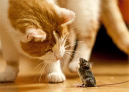 Haselmaus und Katze - kann das gut gehen?