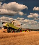 Bauern fordern ein Stück Land von einem Stromkonzern zurück
