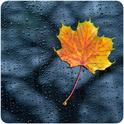 NATURE RADIO RAIN-Logo