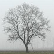 Was kann man an einem tristen, kalten Monat wie dem November mögen? - Zlatans Eltern müssen es herausfinden