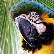 Papagei Billy kann sich jedes Wort merken.