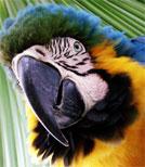 Parzival ist ein Papagei, aber sein Leben gleich dem eines Unglücksraben
