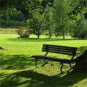 Bäume in Parks bleiben nicht von der Klimakrise verschont.