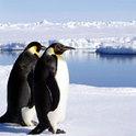 Zwei Pinguine sollen von Noah gerettet werden, aber was ist mit dem dritten?