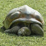 Dass das Gürteltier mit der Schildkröte verwandt ist, ist ja eigentlich auch deutlich erkennbar!