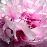 Auf Japanisch bedeutet Hana Blüte.