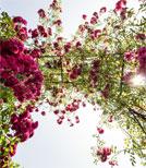 Der Freiburger Autor und Kabarettist Jess Jochimsen lädt in den Rosengarten ein
