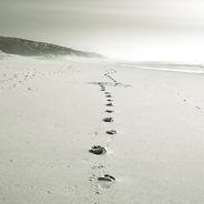 Schnee oder Sand? Keine Ahnung wo hin, aber zielgerichtet. Und was ist eigentlich mit Herrn Vater los?