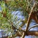 Was wird aus dem kleinen Tannenbaum?