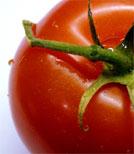 Die kleine Fine knickt aus Versehen eine Tomatenpflanze um - und die Ereignisse nehmen ihren Lauf