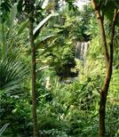 Ayahuasca fand seinen Weg aus dem Regenwald in die ganze Welt