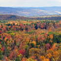 Vermont ist bekannt für seine natürlichen Wälder