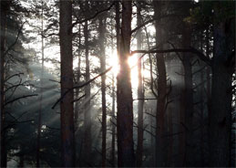 Vor 18 Jahren: Der unaufgeklärte Doppelmord im Wald.