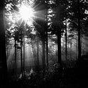 Was geht vor sich im Wachtberger Wald?