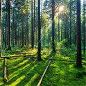 Märchen erzählen oft von verwunschenen Wäldern und fantasievollen Wesen