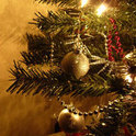 Zu Weihnachten stand der kleine Tannenbaum noch hübsch geschmückt in der Stube