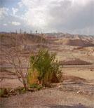 Treffen sich sechs Berner in der Wüste...